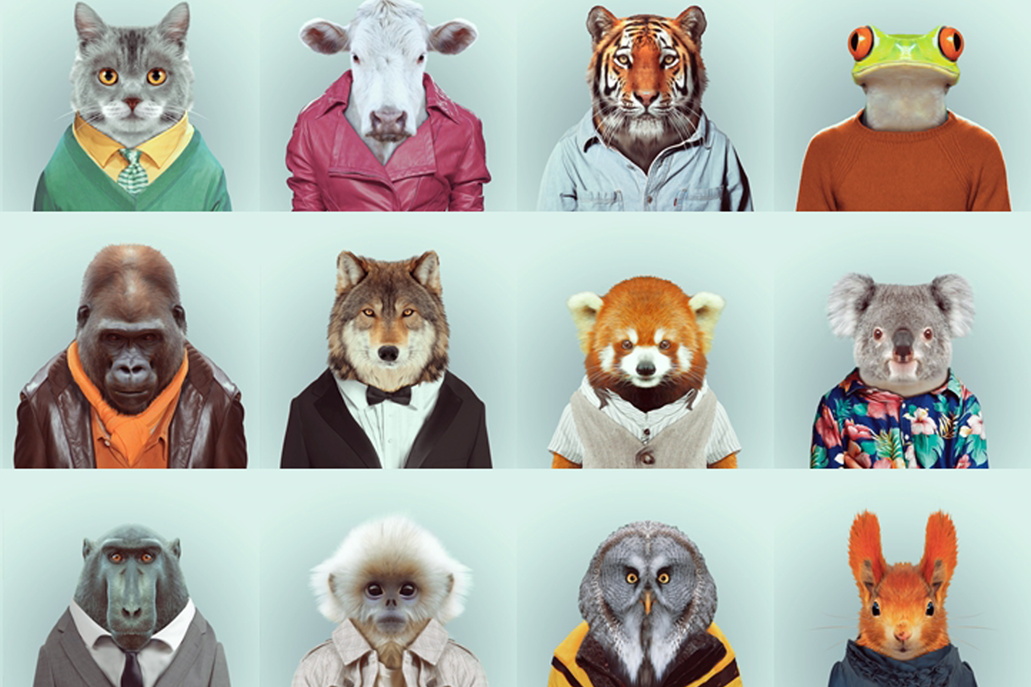 Zoo Animal Portraits by Yago Partal 9